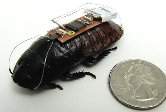 Cyborg Cockroach